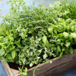 Medicinal and Nutritious Benefits of Fresh Herbs 1